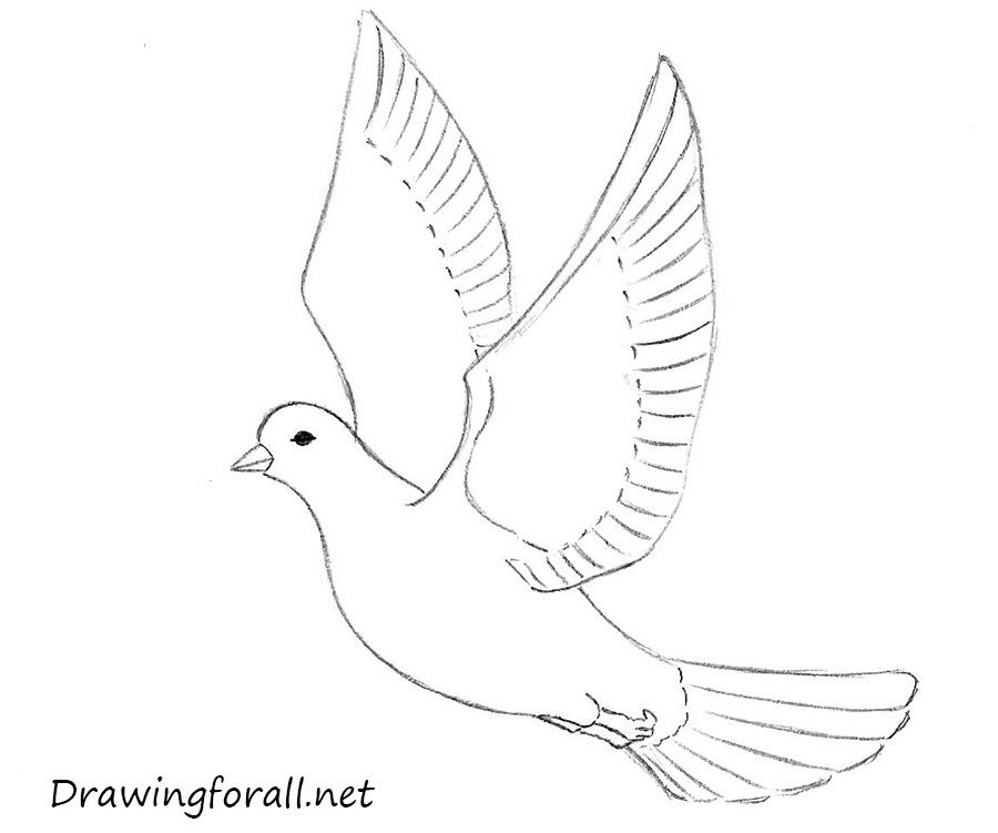 How To Draw A Dove For Beginners Dove Drawing Drawing For