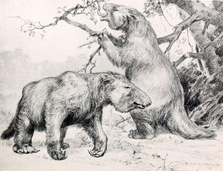 Pin by Spieler Vorhand on ZOO Animals, Ground sloth