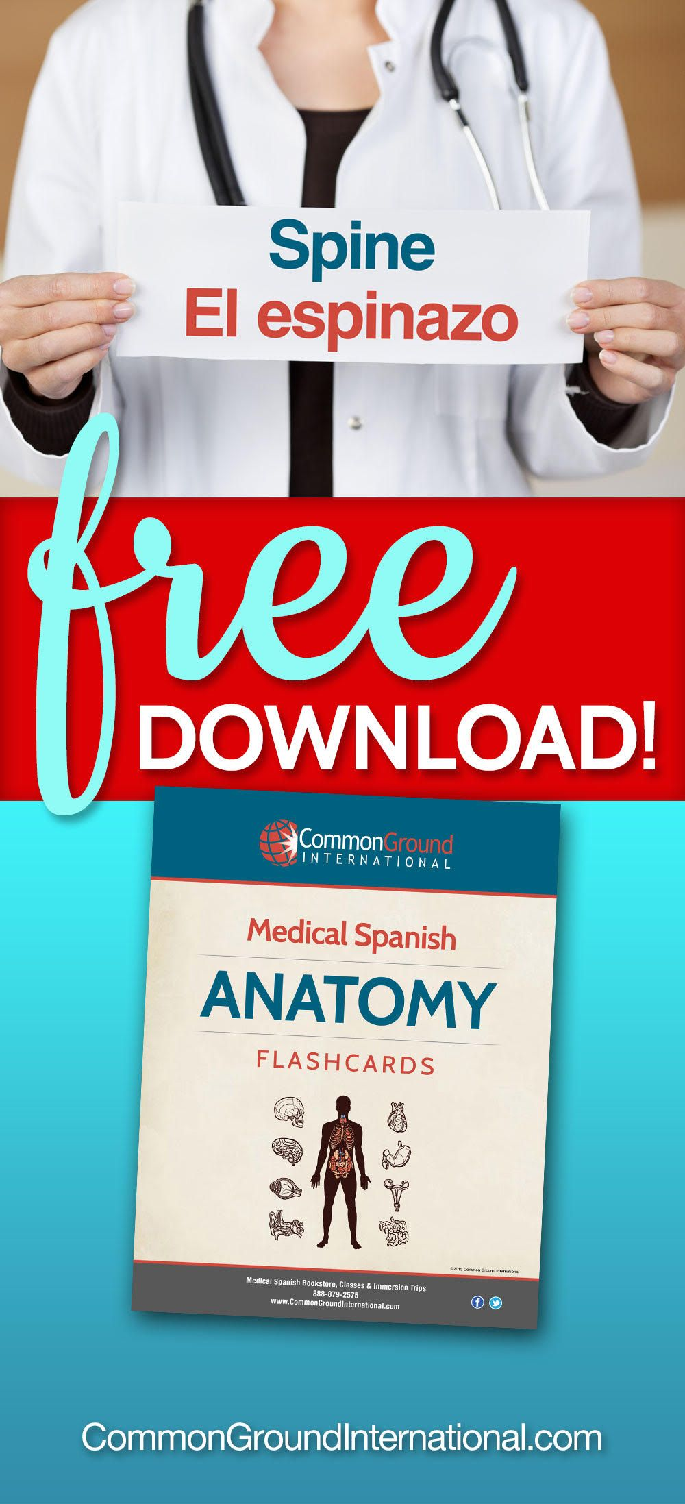 Parts of the body in Spanish: free flashcard download   Medical ...