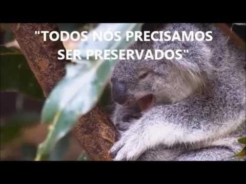 NATUREZA | PRESERVAÇÃO É PRECISO!