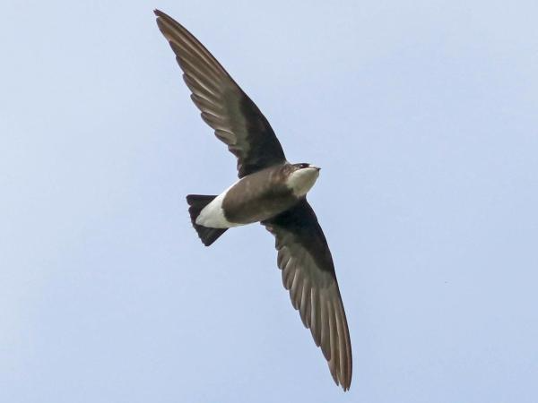 Cuál Es El Ave Más Rápida Del Mundo Las 9 Aves Más Rápidas En Cielo Y Tierra Con Fotos En 2021