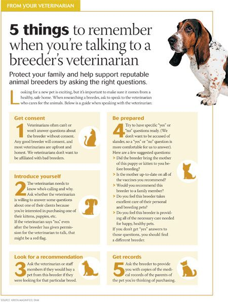 Download This Tool To Help Clients Talk To A Breeder S