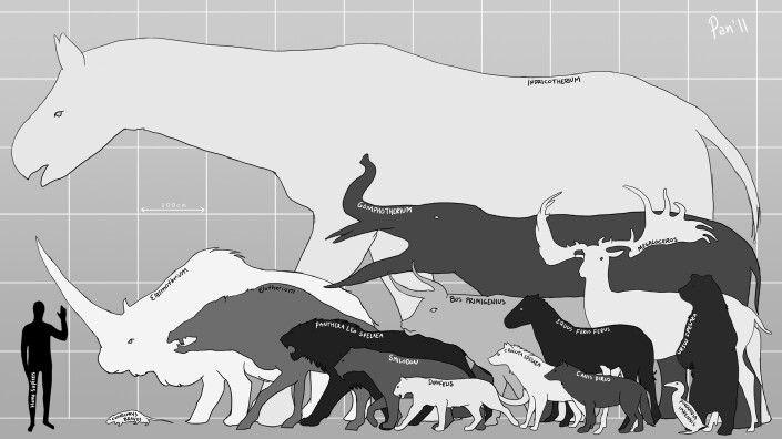 حيوان Paraceratherium أضخم حيوان ثديي كان يعيش على الأرض عُرف حتى الآن. #الثدييات  #Paraceratherium