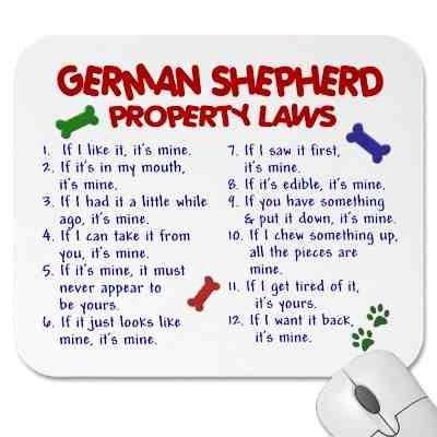 funny pics of german shepherds - Google Search