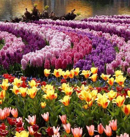Alberto Flores Google Beautiful Gardens Tulips Garden Colorful Garden