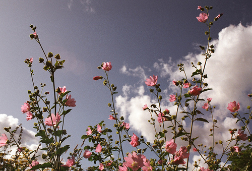 Image About Tumblr In Soft By Mlartigue On We Heart It In 2020 Aesthetic Desktop Wallpaper Aesthetic Wallpapers Flower Aesthetic