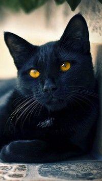Czarny Kot O Złotych Oczach Tapety Na Telefon Tapeciarniapl