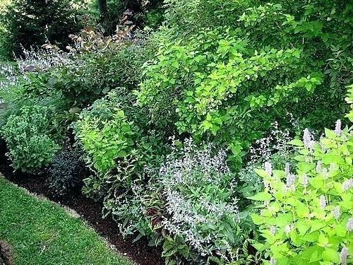 shrubs for garden borders shrubs for garden borders shrub border evergreen shrubs for garden