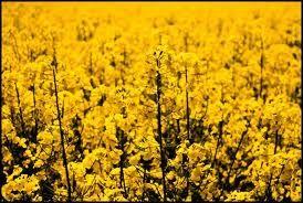 Jardín amarillo