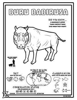 A Buru Babirusa Coloring Page