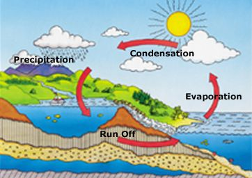 Illustration Of The Basic Water Cycle Including Run Off Evaporation Condensation And Precipitation Evaporation Weather Patterns Precipitation