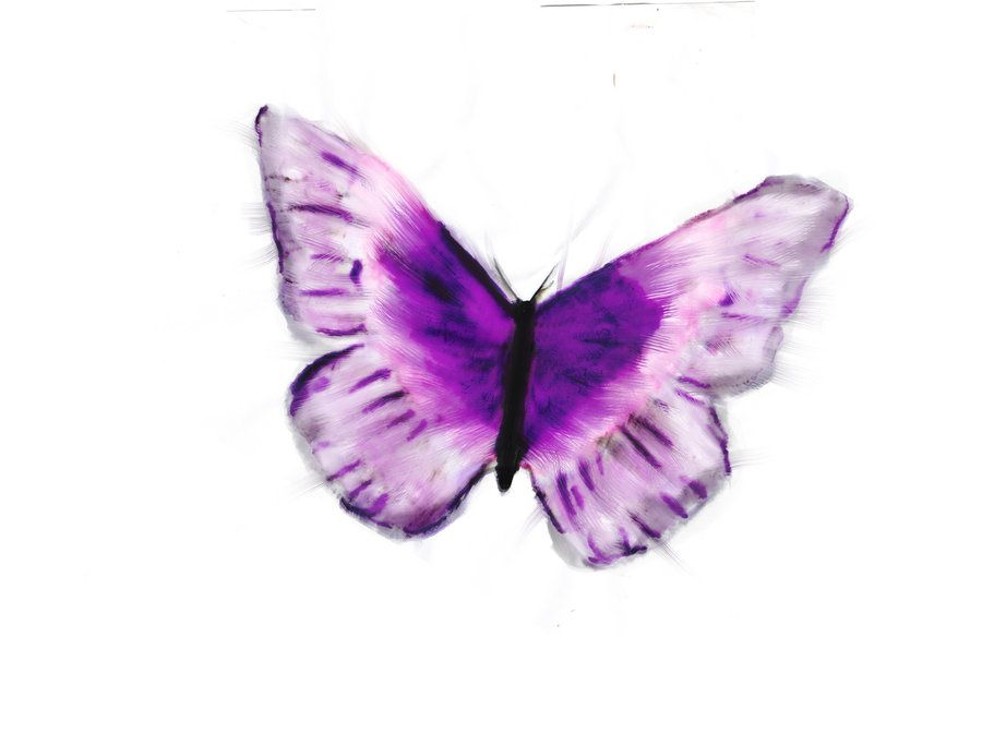 Butterfly Art Images Water Coor Butterfly Purple By Danhepage
