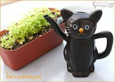 arrosoir chat