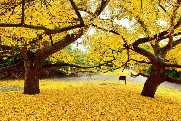 Get Your Fall Fix 10 Best Places To See Autumn Leaves In Southern California South Coast Botanic Garden Deciduous Trees Cool Playgrounds