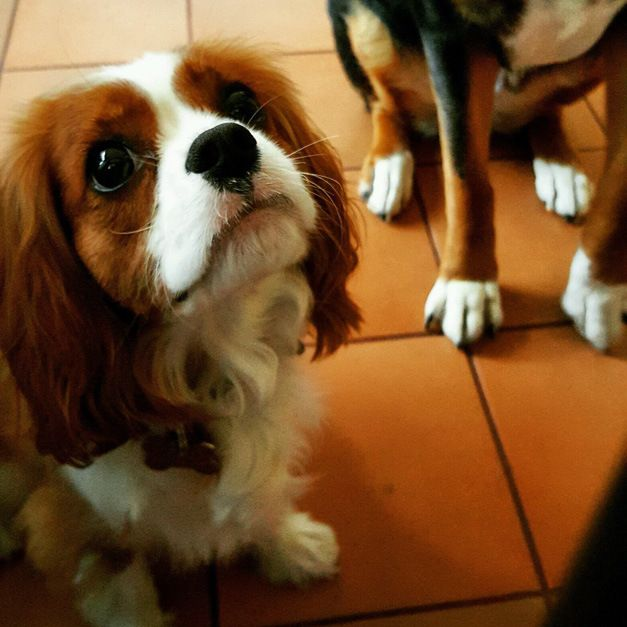 Post - Pamper Your Pooch - Marcia Ludlow - 2