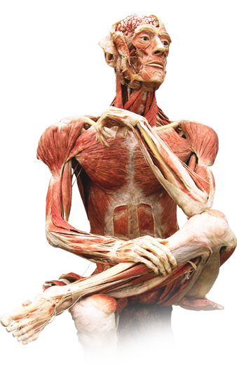 Body Worlds. Science Museum of Virginia. May 25th-September 23rd ...