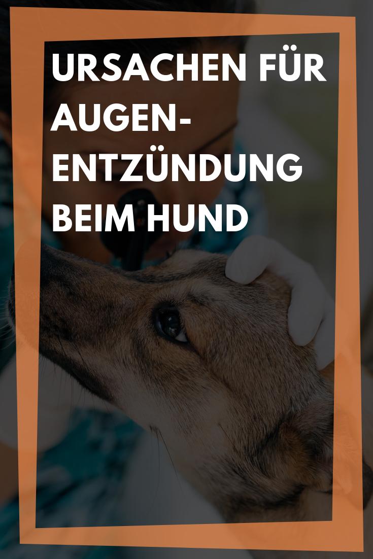 Augentropfen Fur Hunde Welche Tropfen Sind Am Besten Geeignet Hunde Tierarzt Hundeaugen