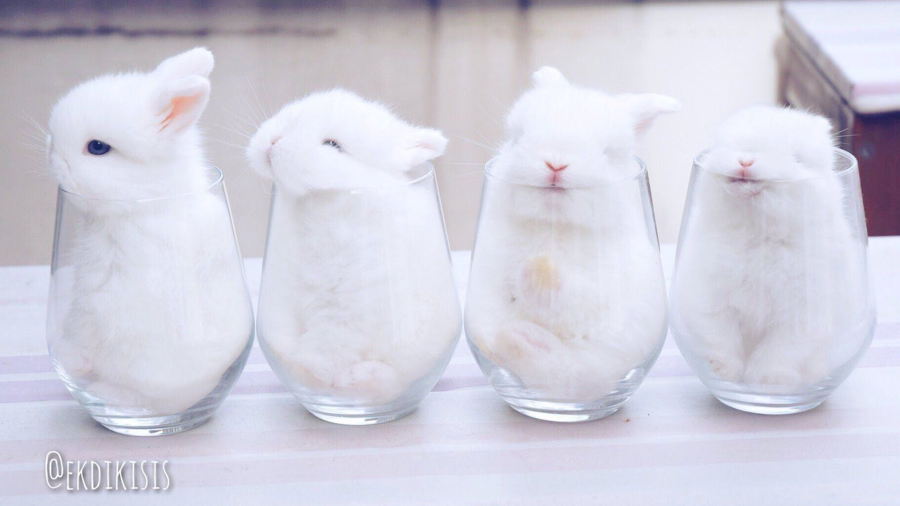 Cutest Bunny Video ever!