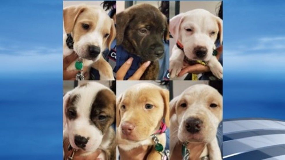 6 new rescue puppies to be trained by Nashville inmates