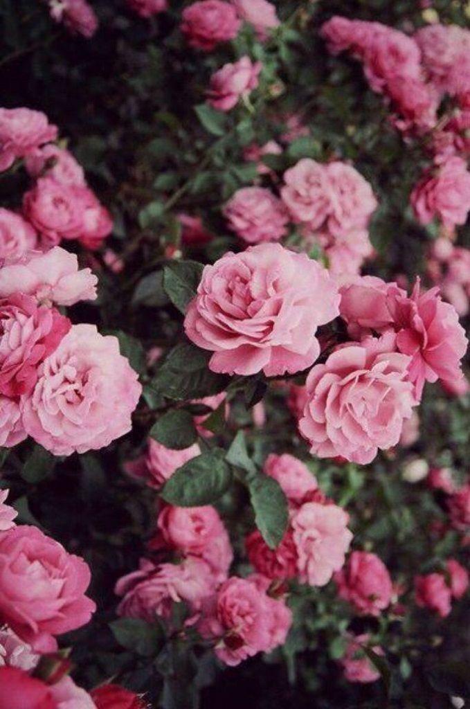 Beautiful flower iPhone wallpaper