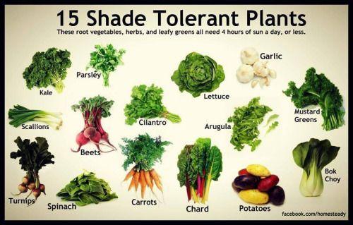 Shade Loving Vegetable Garden How Do You Increase The 400 x 300