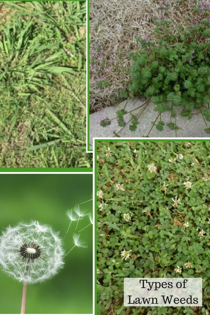 How To Turn A Yard Of Weeds Into Gr Migrant Resource