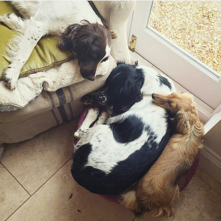 Best Friends Squidge Treacle And Piglet Fleur De Force Youtube Dog Person Cute Animals Animals