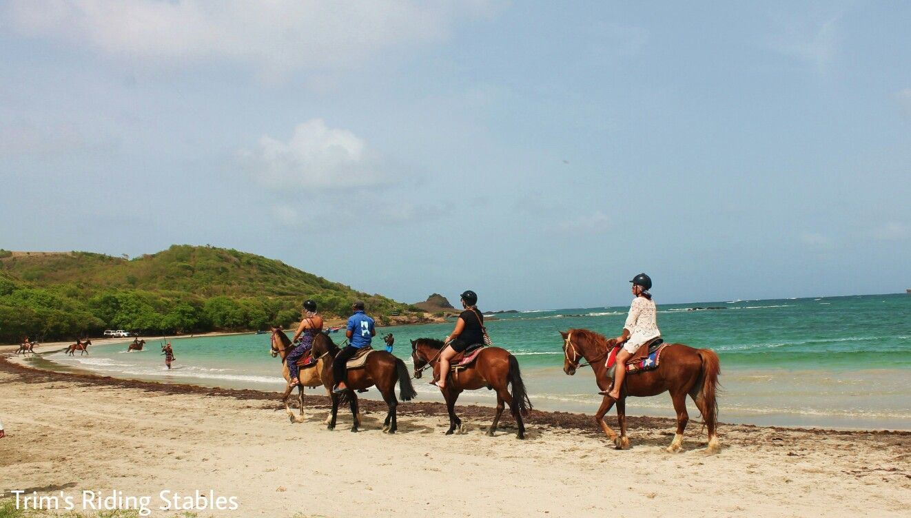 Horse Riding Along The Beach In St Lucia With Trim S Les