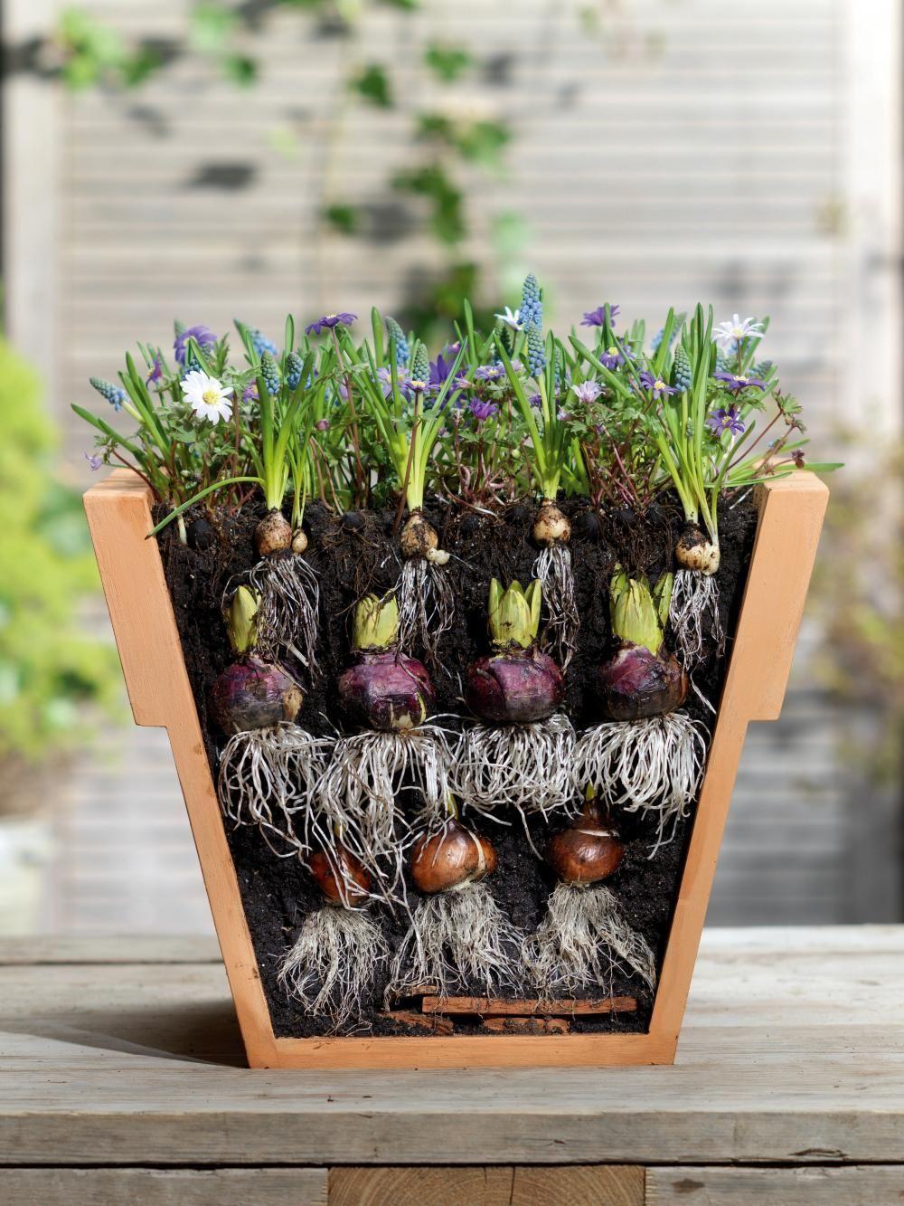 10 Tipps rund um Blumenzwiebelnblumenzwiebeln rund