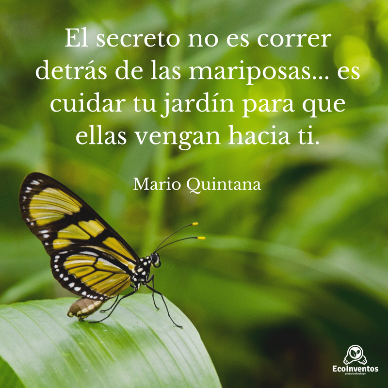 El secreto no es correr detr s de las mariposas es for Cancion el jardin