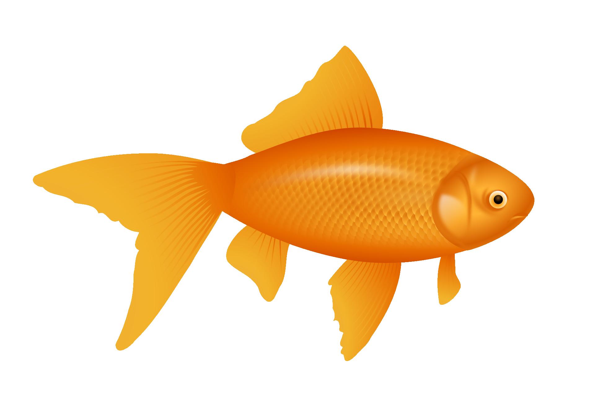Fish Images Google Search Fish Wallpaper Fish Red Fish