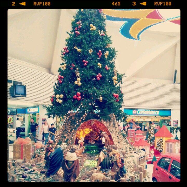 Arbol de Navidad y #Nacimiento C.C. Alban Borja