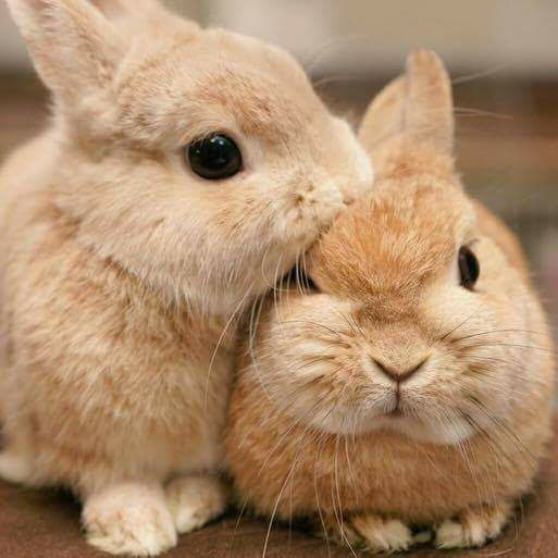 зайчики целуются фото встречу представителем