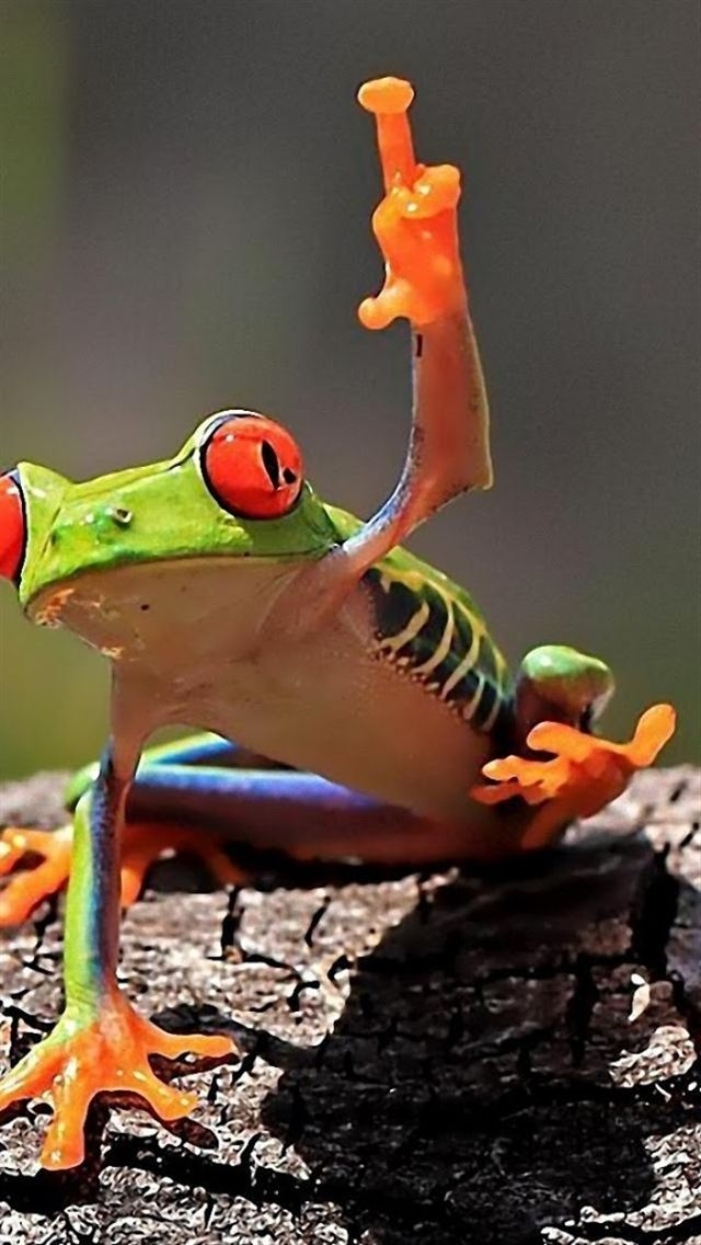Frog Wallpaper For Iphone And Android Frog Frog Wallpaper Cute Frogs
