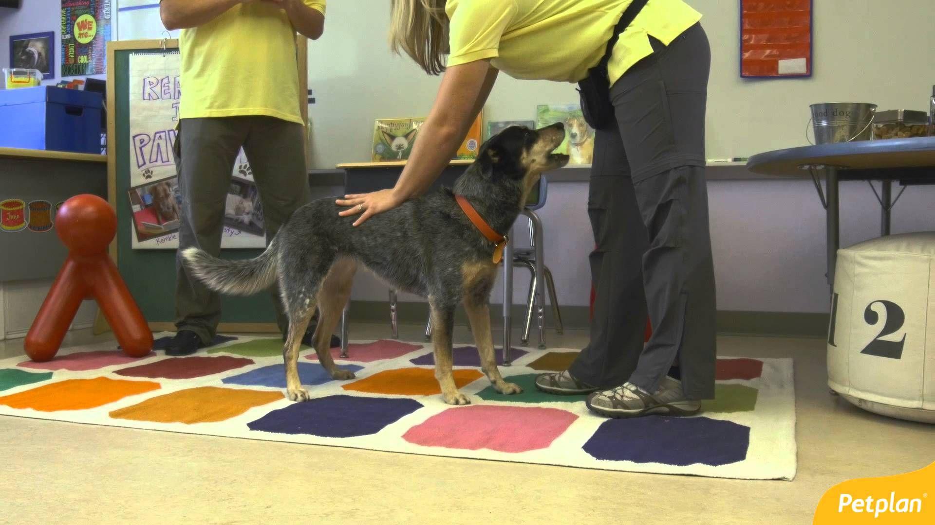 Learning the ABCs How to Master the Basic Dog Training
