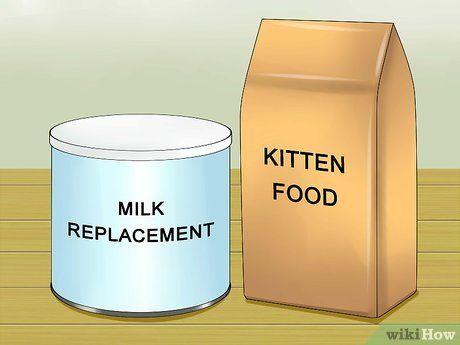 Wean Kittens Kittens, Kitten food, Milk replacement