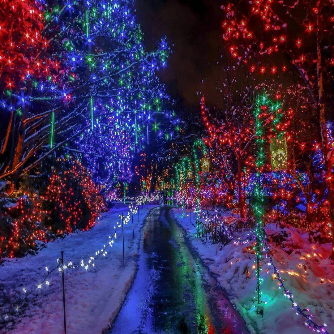 Image result for Christmas vancouver nature in winter