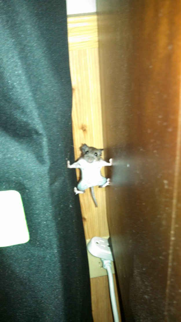 17 Mice Who Are Totally Fricking Stirring This Christmas Eve