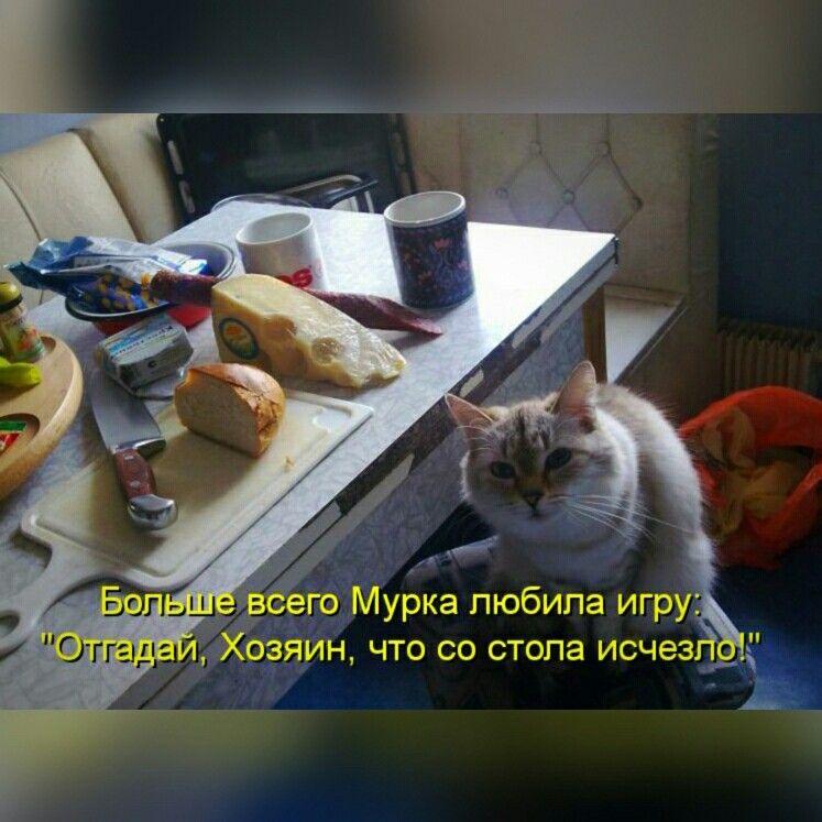 Картинки с кошками со смешными надписями