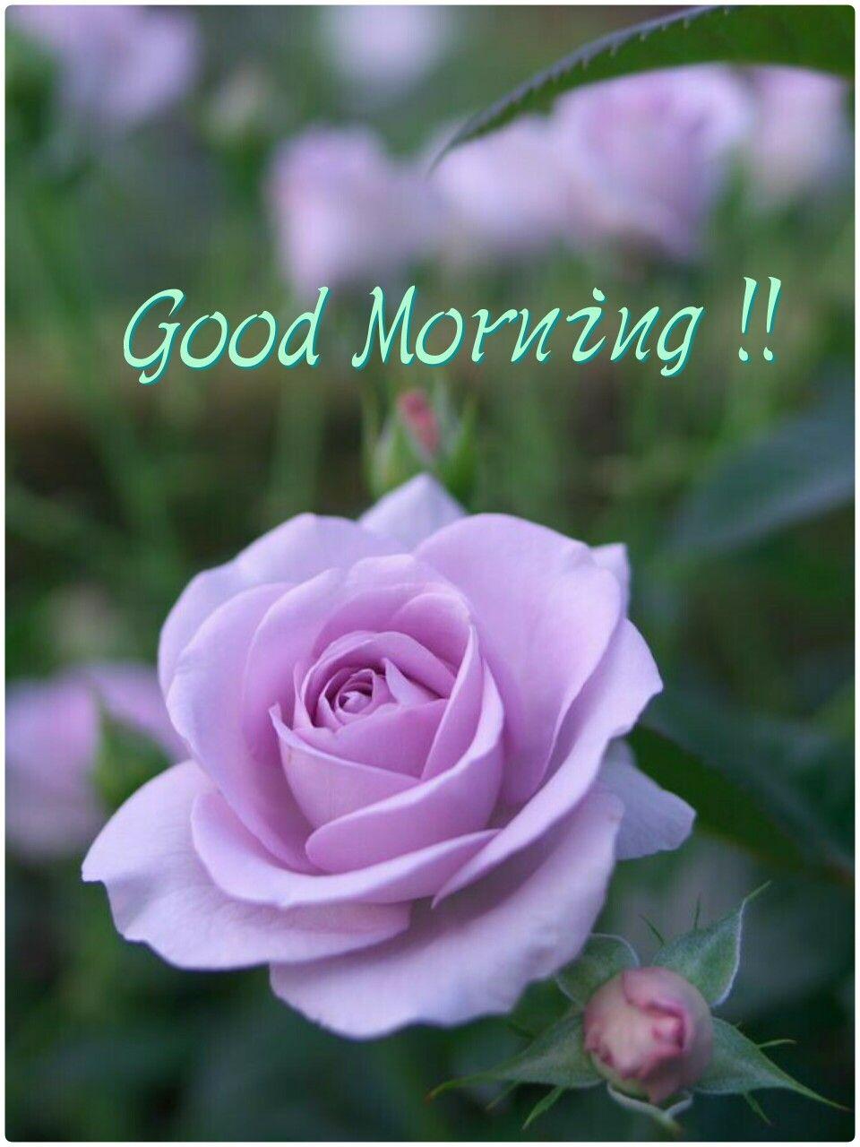 good morning good morning pinterest guten morgen bilder morgen bilder und guten morgen. Black Bedroom Furniture Sets. Home Design Ideas