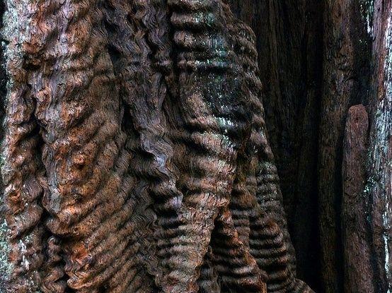 hair-like tree bark by marva