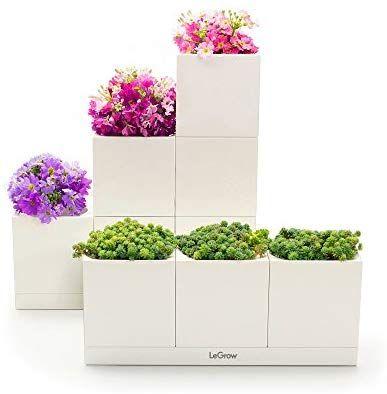 Amazon Com Legrow Basic Indoor Hydroponic Herb Garden Kit 400 x 300
