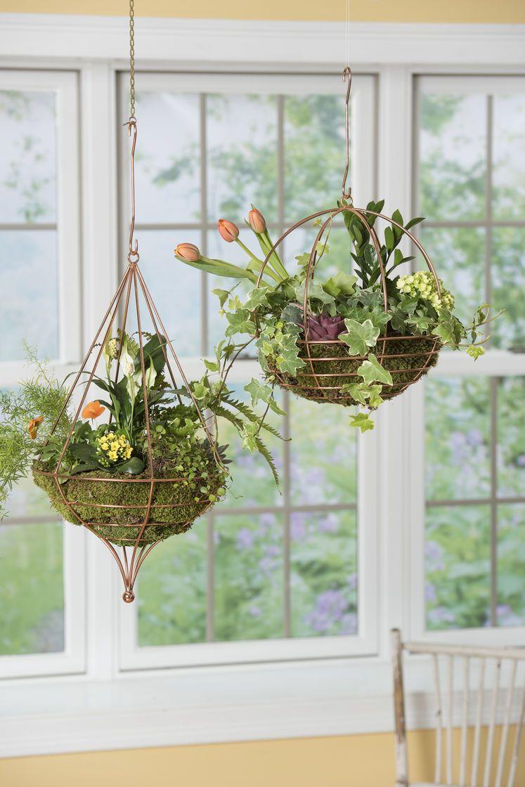 Teardrop Shaped Copper Wire Hanging Basket Terrarium For Air Plants Plants For Hanging Baskets Hanging Baskets Hanging Plants