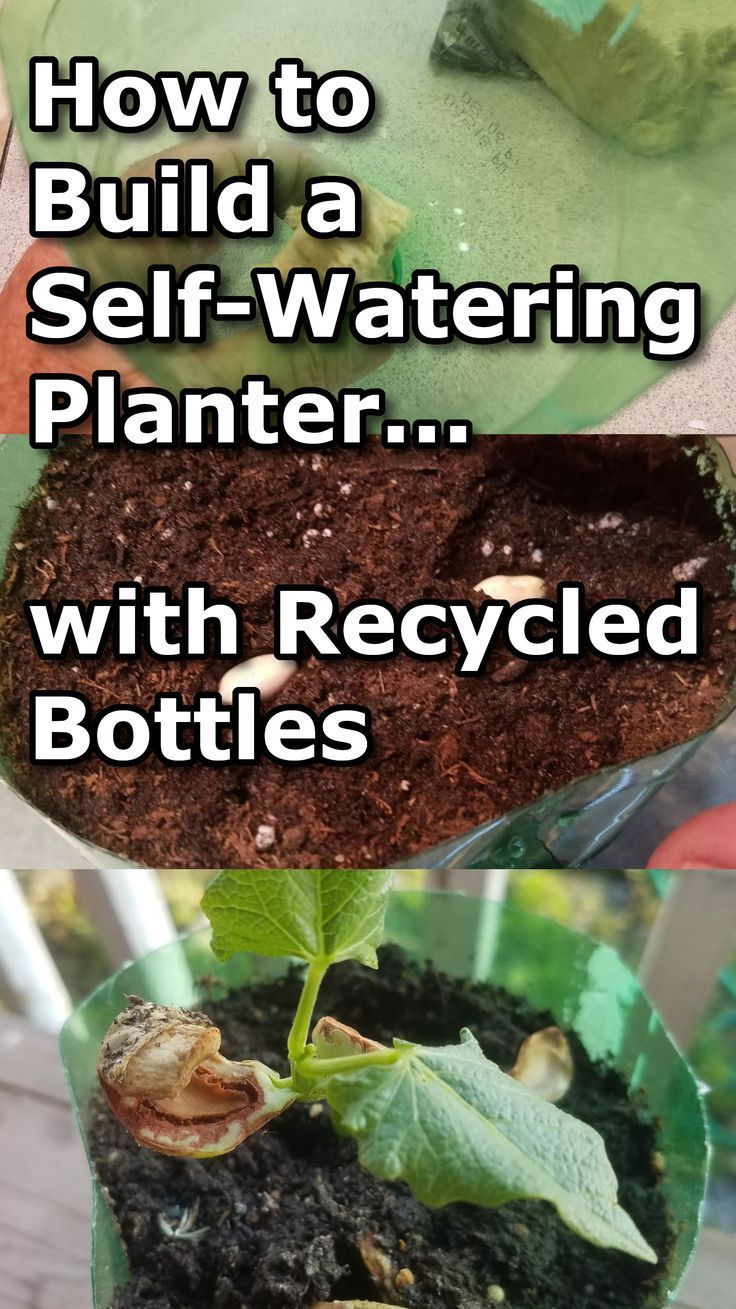 Learn how to build a self-watering planter made from recycled plastic bottles