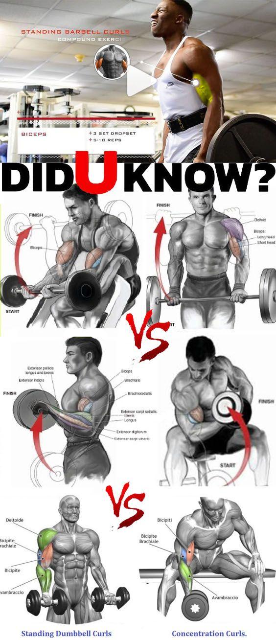 Bicep Workout For Grow Biceps Workout Biceps Forearm Workout