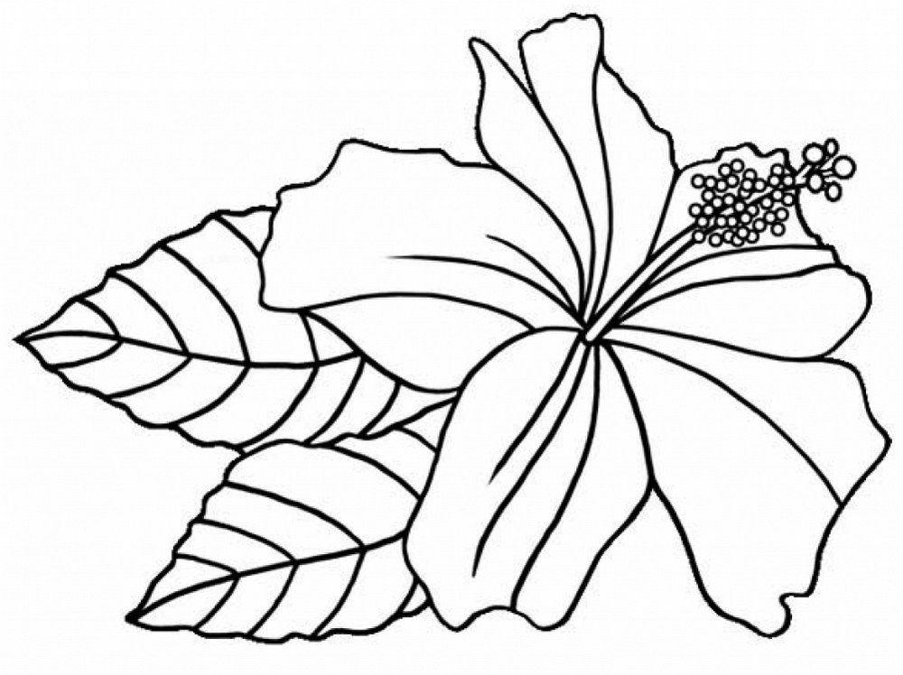 Hibiscus Coloring Page Relaxation Lukisan Bunga Bunga