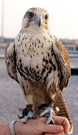 Animal Training Birds Of Prey In 2020 Birds Of Prey Animals Pet Birds