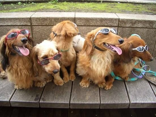 Doggles for everyone!