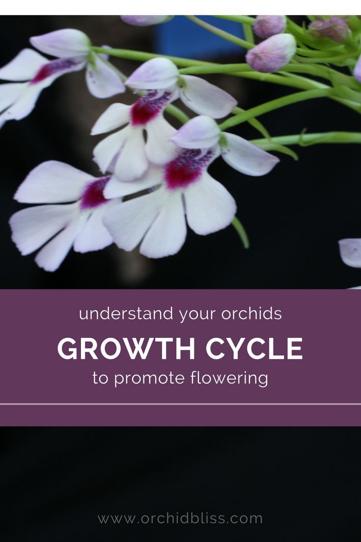 Growth patterns of monopodial and sympodial orchids house happy