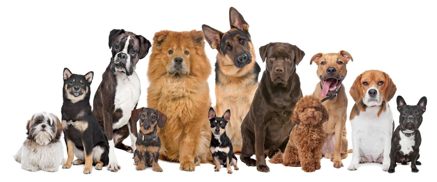 GROOMING IDEAS Google Search Dog breeds, Smartest dog